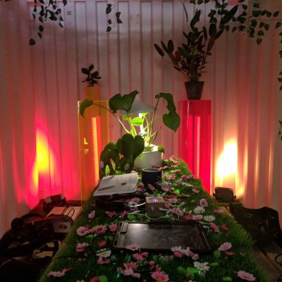 Internal Garden at Lunar Festival